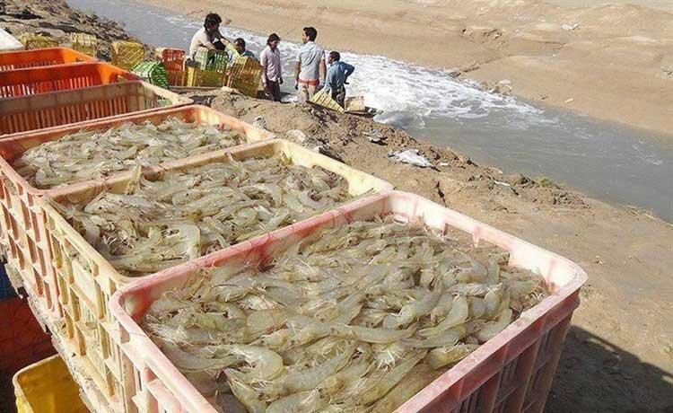 حمایت از طرح های پرورش ماهی و میگو